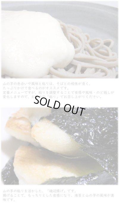 画像3: 丹波篠山 山の芋(つくね芋)普通品 1kg