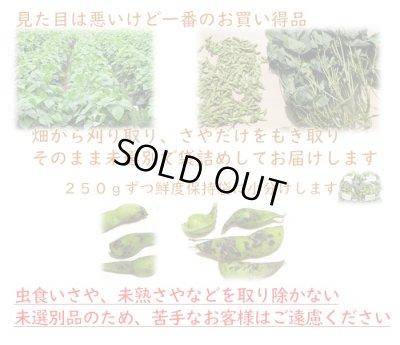 画像2: 一番お得 10月お届け 丹波篠山黒枝豆 「未選別さや」 鮮度保持袋入 1kg
